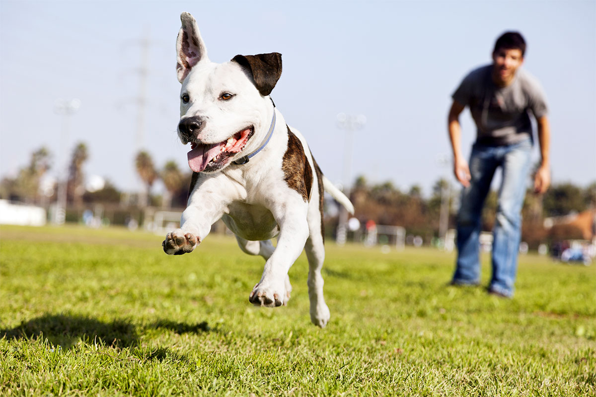Your Sport Court Game Court Holds Up Against Pets