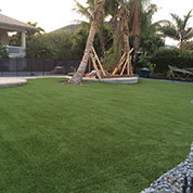 Backyard Florida Turf